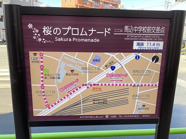 写真:桜のプロムナードの案内板